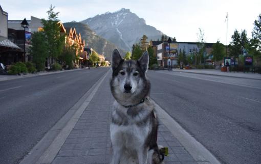 Juno the Snowdog